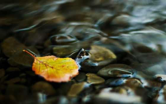 water, ручей, лист, прозрачная, yellow, камушки,