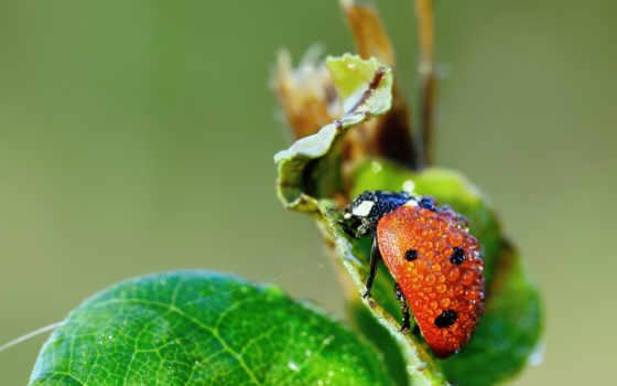 galaxy, samsung, ladybug, божья, коровка, grand, htc, роса, капли, covered,