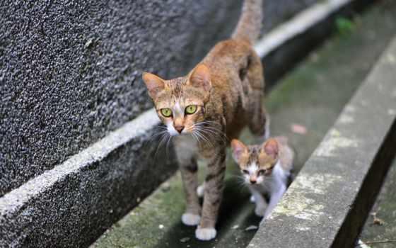 кошки, кот,