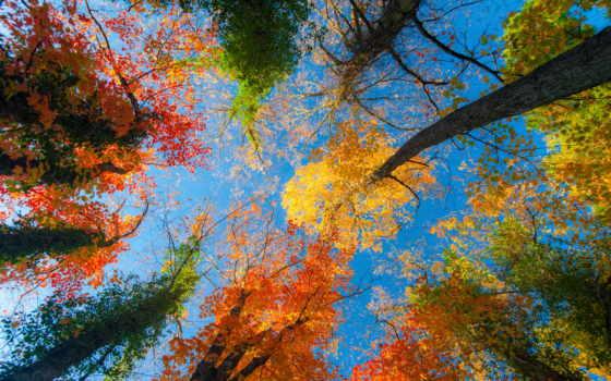 осень, full, красивые, деревьев, широкоформатные, картинки, осенних, микс, осени,
