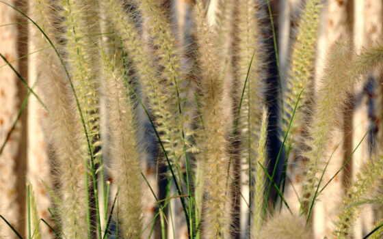 трава, цветы, одуванчик, summer, природа, поле, растение, landscape