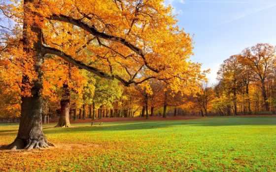 priroda, пейзаж, трава
