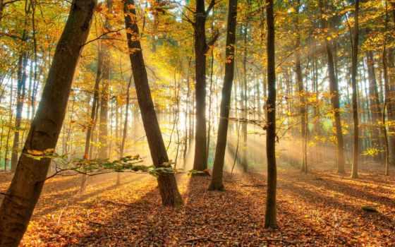осень, пейзажи -, лес