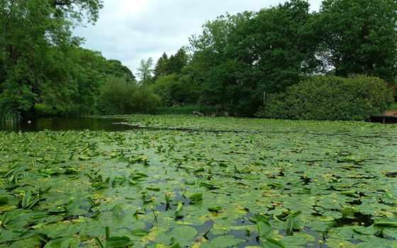 пруд, trees, naturaleza, изображения, pack, paisajes,