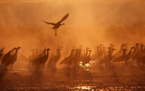 птицы, журавли, обою, птиц, name, серые, беларуси, пластиковых, озеро, самарской, области,