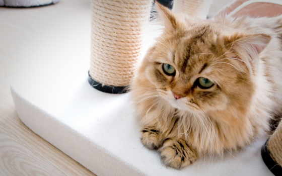 кот, грусть, гремпи, нояб, kotyara, full, свет,
