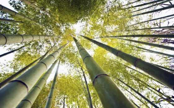 бамбук, live, free, mobile, bambu, lucas, cabo,