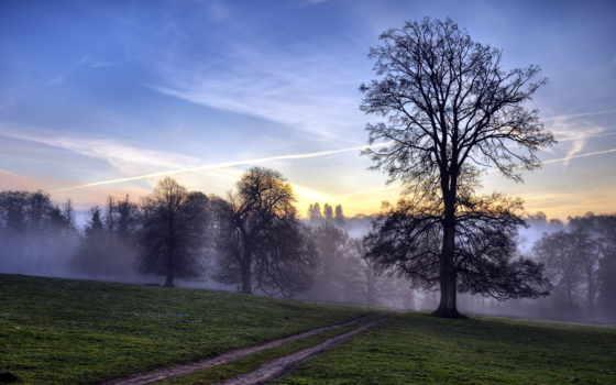 туман, дорога, лес, trees, утро, поле, рассвет, закат, смешные,