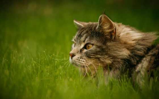 кот, коллекция, серый, взгляд, зелёный, трава
