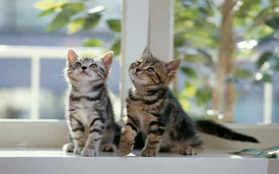 котята, коты, кошки