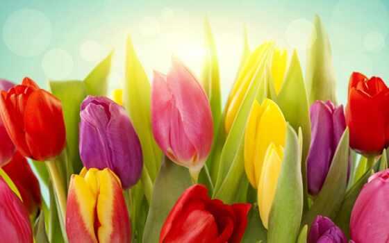 тюльпаны, цветы, желтые Фон № 70812 разрешение 2560x1440
