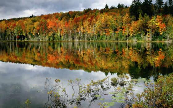 осень, лес, лесу