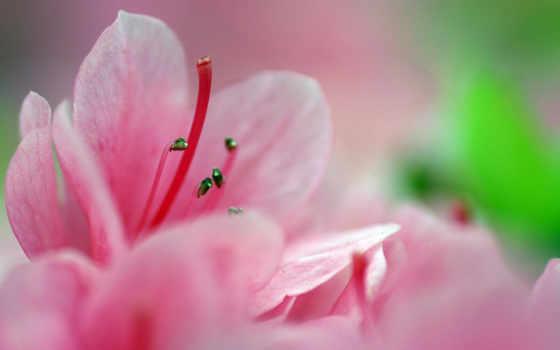 весна, бесплатные, guide, красивые, широкоформатные, без, национальное,