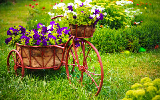 bike, cvety, flowers, petunia, мотоспорт,