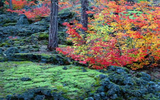 лес, атмосфера, flipkart, только, great, природа, осень, photographic, art, купить,