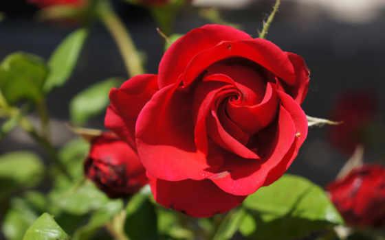 Цветы 19996