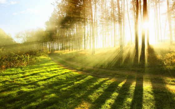 природа, sun, свет