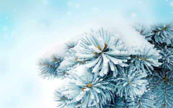 winter, снег, ветки