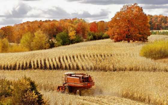 урожай, osen, pole, priroda, пшеница, les, комбайн,