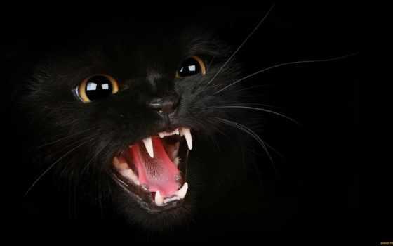 gato, gatos, los, erizado, parede, fondos, papel, pelo, con, que,
