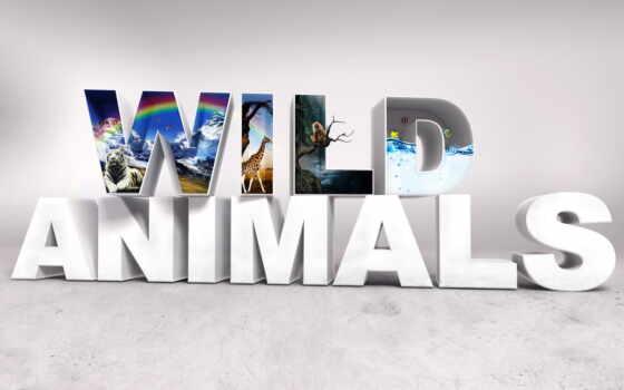 animals, wild, baby, животные, микс, desktop,