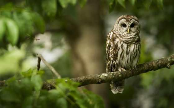 сова, сидит, branch, ветке, разрешениях, широкоформатные, разных, птица,