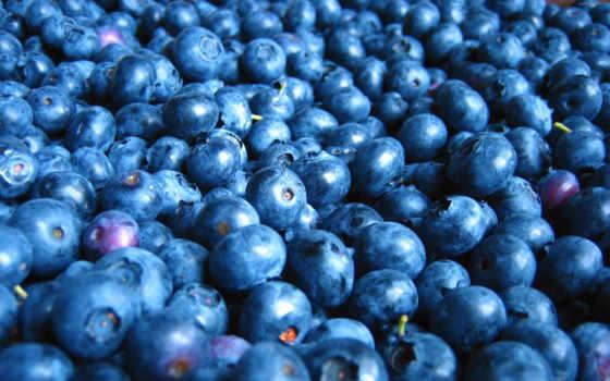 черника, ягода, meal, коллекция, плод, стать
