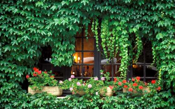 house, вьюн, garden, стена, дачный, растение, забор, land, современный