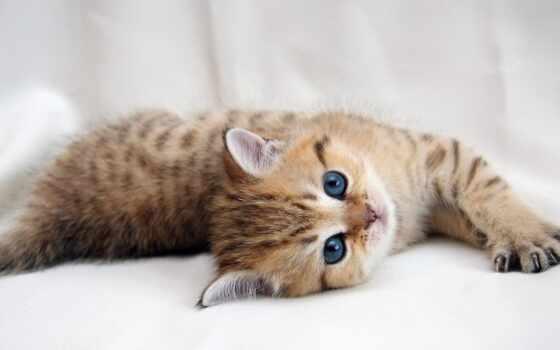 laser, кот, указатель, reply, gato, корм, вопрос, ответить, существительное
