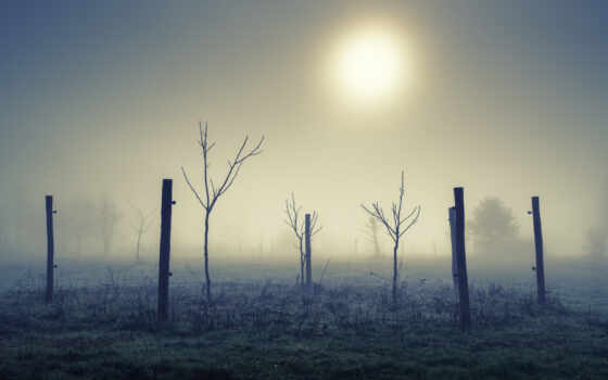 landscape, natural, поле, утро, туман