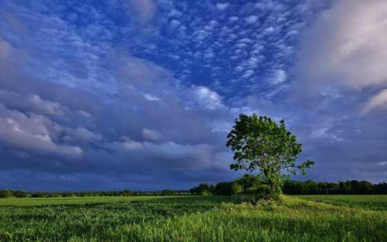 дерево, поле Фон № 32256 разрешение 1920x1080