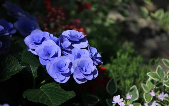 цветы, nokia, xhtx