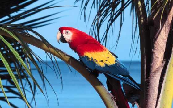 птицы, красивые, самые