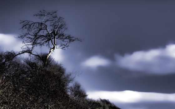 дерево, landscape, symphony, bruckner, watercolor, фоны, категории, iduefoscari,