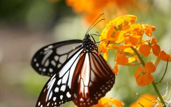 цветы, flowers, природа, photography, картинка, market, desktop,