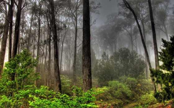 landscape, пейзажи -, trees, лес, небо, совершенно, свой, лесов,