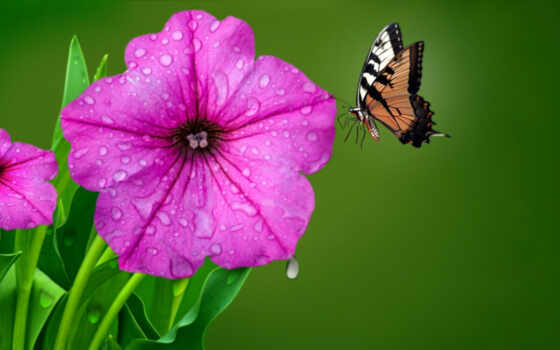 роса, утро, цитата, цветы, яndex, бабочка, happy, wish, хороший, user, rainy