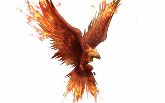 art, fantasy, phoenix