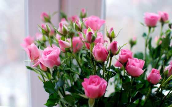 розы, маленькие, букет
