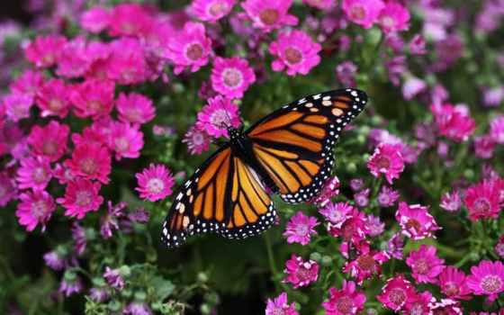 бабочка, cvety, голова