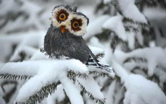 сова, winter, ёль