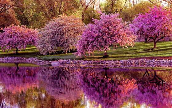 весна, цветущая, Сакура, уже, пейзажи -, их, весной, time, соку, ли, нам,
