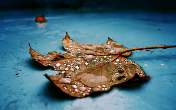 galaxy, нота, samsung, природа, leaf, free, normal,