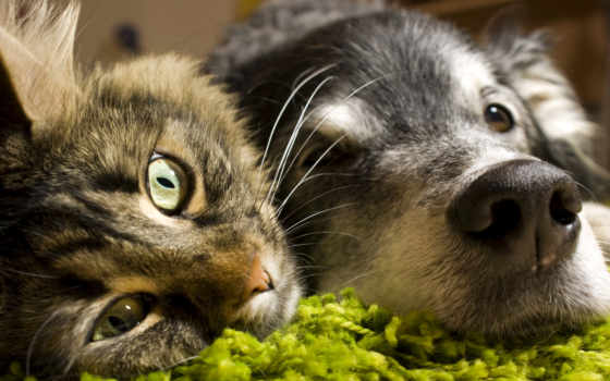 love, фотографий, имеют, many, звери, думаю, февр, чувств, gatos, cachorros, windows,