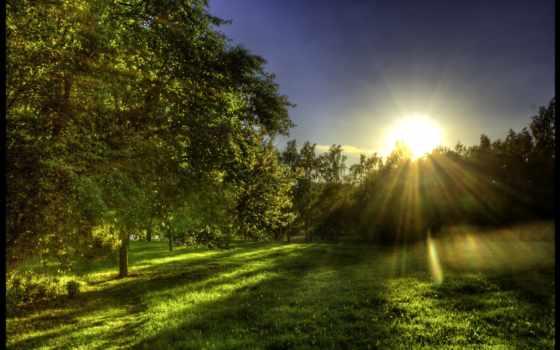 весна, sun, утро, поляна, лучах, вышивки, солнца, лес,