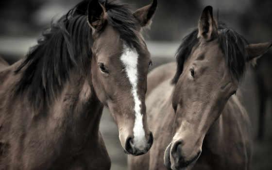 , лошади, головы,