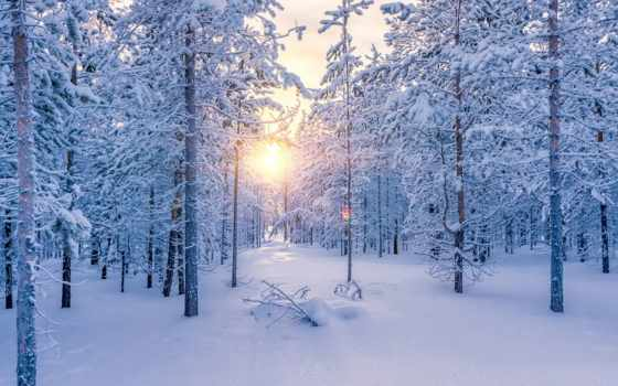 коллекция, winter, лес, яndex, красивейшие, land, коллекциях, чтоб,