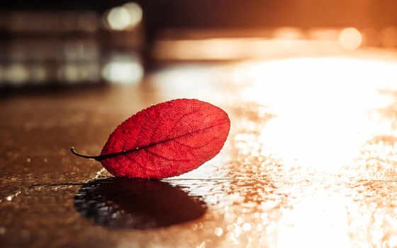 фон, осень, leaf, you,