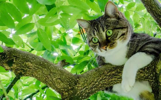 кошки, кот, лучшая, загружено, уже, коллекция, summer, широкоформатные, листва,