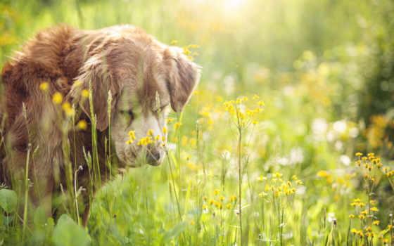 dog Фон № 15590 разрешение 1920x1200